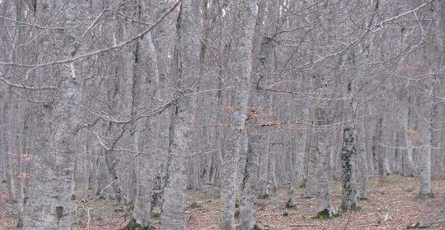 el proceso grafico como un bosque